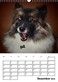 Fang das Leckerli (Wandkalender 2019 DIN A3 hoch) - Produktdetailbild 12