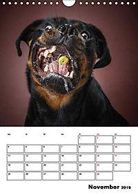 Fang das Leckerli (Wandkalender 2019 DIN A4 hoch) - Produktdetailbild 9