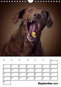 Fang das Leckerli (Wandkalender 2019 DIN A4 hoch) - Produktdetailbild 10
