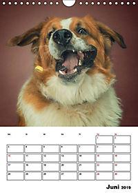 Fang das Leckerli (Wandkalender 2019 DIN A4 hoch) - Produktdetailbild 11
