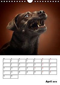 Fang das Leckerli (Wandkalender 2019 DIN A4 hoch) - Produktdetailbild 4