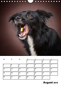 Fang das Leckerli (Wandkalender 2019 DIN A4 hoch) - Produktdetailbild 8