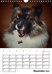 Fang das Leckerli (Wandkalender 2019 DIN A4 hoch) - Produktdetailbild 12