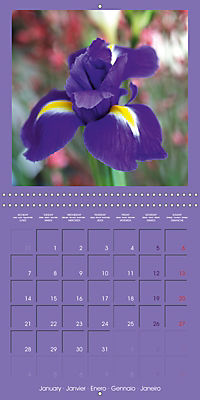 Fantastic Iris (Wall Calendar 2019 300 × 300 mm Square) - Produktdetailbild 1
