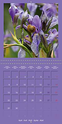 Fantastic Iris (Wall Calendar 2019 300 × 300 mm Square) - Produktdetailbild 4