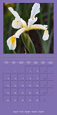 Fantastic Iris (Wall Calendar 2019 300 × 300 mm Square) - Produktdetailbild 8