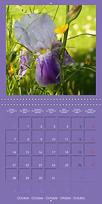 Fantastic Iris (Wall Calendar 2019 300 × 300 mm Square) - Produktdetailbild 10