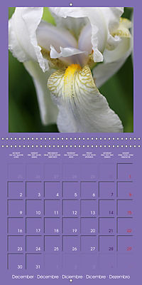 Fantastic Iris (Wall Calendar 2019 300 × 300 mm Square) - Produktdetailbild 12