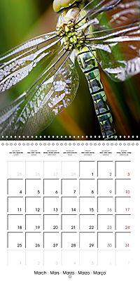 Fantastic Odonata (Wall Calendar 2019 300 × 300 mm Square) - Produktdetailbild 3