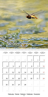 Fantastic Odonata (Wall Calendar 2019 300 × 300 mm Square) - Produktdetailbild 2
