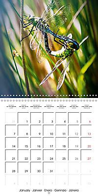 Fantastic Odonata (Wall Calendar 2019 300 × 300 mm Square) - Produktdetailbild 1