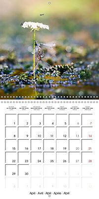 Fantastic Odonata (Wall Calendar 2019 300 × 300 mm Square) - Produktdetailbild 4