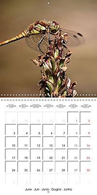 Fantastic Odonata (Wall Calendar 2019 300 × 300 mm Square) - Produktdetailbild 6