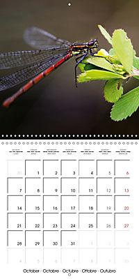 Fantastic Odonata (Wall Calendar 2019 300 × 300 mm Square) - Produktdetailbild 10