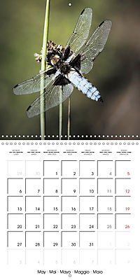 Fantastic Odonata (Wall Calendar 2019 300 × 300 mm Square) - Produktdetailbild 5