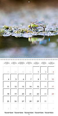 Fantastic Odonata (Wall Calendar 2019 300 × 300 mm Square) - Produktdetailbild 11