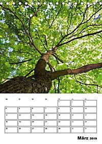 Farben der Natur (Tischkalender 2019 DIN A5 hoch) - Produktdetailbild 3