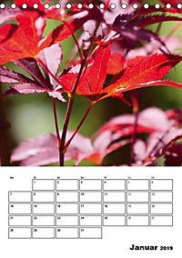 Farben der Natur (Tischkalender 2019 DIN A5 hoch) - Produktdetailbild 1
