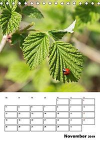 Farben der Natur (Tischkalender 2019 DIN A5 hoch) - Produktdetailbild 11