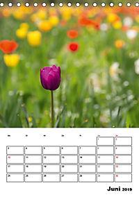 Farben der Natur (Tischkalender 2019 DIN A5 hoch) - Produktdetailbild 6