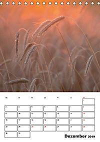 Farben der Natur (Tischkalender 2019 DIN A5 hoch) - Produktdetailbild 12