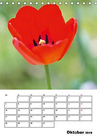 Farben der Natur (Tischkalender 2019 DIN A5 hoch) - Produktdetailbild 10