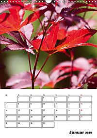 Farben der Natur (Wandkalender 2019 DIN A3 hoch) - Produktdetailbild 1