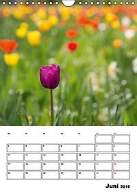 Farben der Natur (Wandkalender 2019 DIN A4 hoch) - Produktdetailbild 6
