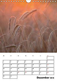 Farben der Natur (Wandkalender 2019 DIN A4 hoch) - Produktdetailbild 12