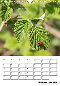 Farben der Natur (Wandkalender 2019 DIN A4 hoch) - Produktdetailbild 11