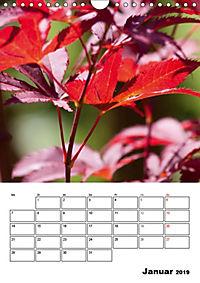 Farben der Natur (Wandkalender 2019 DIN A4 hoch) - Produktdetailbild 1
