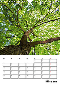 Farben der Natur (Wandkalender 2019 DIN A4 hoch) - Produktdetailbild 3