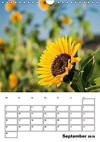Farben der Natur (Wandkalender 2019 DIN A4 hoch) - Produktdetailbild 9