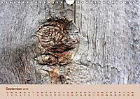 Farben des Holzes (Wandkalender 2019 DIN A4 quer) - Produktdetailbild 9