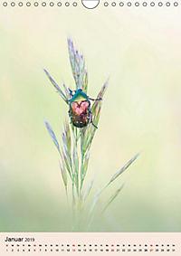 Farben und Lichter - der Natur (Wandkalender 2019 DIN A4 hoch) - Produktdetailbild 1