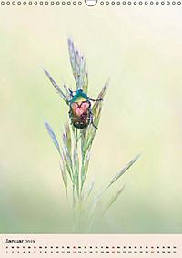 Farben und Lichter - der Natur (Wandkalender 2019 DIN A3 hoch) - Produktdetailbild 1