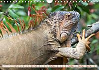 Farbenfrohes Costa RicaAT-Version (Wandkalender 2019 DIN A4 quer) - Produktdetailbild 12