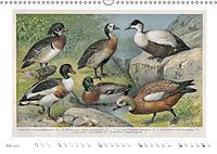 Farbenprächtige Fauna. Fische, Vögel, Schmetterlinge in Grafiken des 19 Jahrhunderts (Wandkalender 2019 DIN A3 quer) - Produktdetailbild 5