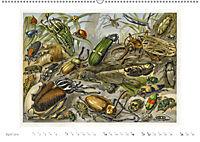 Farbenprächtige Fauna. Fische, Vögel, Schmetterlinge in Grafiken des 19 Jahrhunderts (Wandkalender 2019 DIN A2 quer) - Produktdetailbild 4