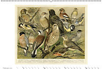 Farbenprächtige Fauna. Fische, Vögel, Schmetterlinge in Grafiken des 19 Jahrhunderts (Wandkalender 2019 DIN A2 quer) - Produktdetailbild 2