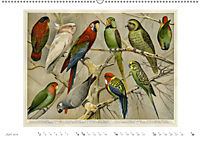 Farbenprächtige Fauna. Fische, Vögel, Schmetterlinge in Grafiken des 19 Jahrhunderts (Wandkalender 2019 DIN A2 quer) - Produktdetailbild 6