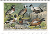 Farbenprächtige Fauna. Fische, Vögel, Schmetterlinge in Grafiken des 19 Jahrhunderts (Wandkalender 2019 DIN A2 quer) - Produktdetailbild 5