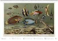 Farbenprächtige Fauna. Fische, Vögel, Schmetterlinge in Grafiken des 19 Jahrhunderts (Wandkalender 2019 DIN A2 quer) - Produktdetailbild 3