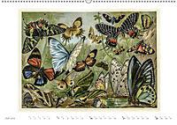 Farbenprächtige Fauna. Fische, Vögel, Schmetterlinge in Grafiken des 19 Jahrhunderts (Wandkalender 2019 DIN A2 quer) - Produktdetailbild 7