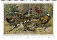 Farbenprächtige Fauna. Fische, Vögel, Schmetterlinge in Grafiken des 19 Jahrhunderts (Wandkalender 2019 DIN A2 quer) - Produktdetailbild 10