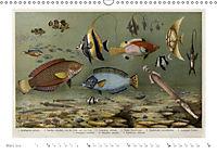 Farbenprächtige Fauna. Fische, Vögel, Schmetterlinge in Grafiken des 19 Jahrhunderts (Wandkalender 2019 DIN A3 quer) - Produktdetailbild 3