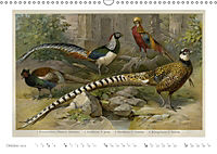Farbenprächtige Fauna. Fische, Vögel, Schmetterlinge in Grafiken des 19 Jahrhunderts (Wandkalender 2019 DIN A3 quer) - Produktdetailbild 10