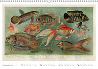 Farbenprächtige Fauna. Fische, Vögel, Schmetterlinge in Grafiken des 19 Jahrhunderts (Wandkalender 2019 DIN A3 quer) - Produktdetailbild 11