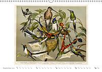 Farbenprächtige Fauna. Fische, Vögel, Schmetterlinge in Grafiken des 19 Jahrhunderts (Wandkalender 2019 DIN A3 quer) - Produktdetailbild 9