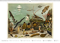 Farbenprächtige Fauna. Fische, Vögel, Schmetterlinge in Grafiken des 19 Jahrhunderts (Wandkalender 2019 DIN A3 quer) - Produktdetailbild 12